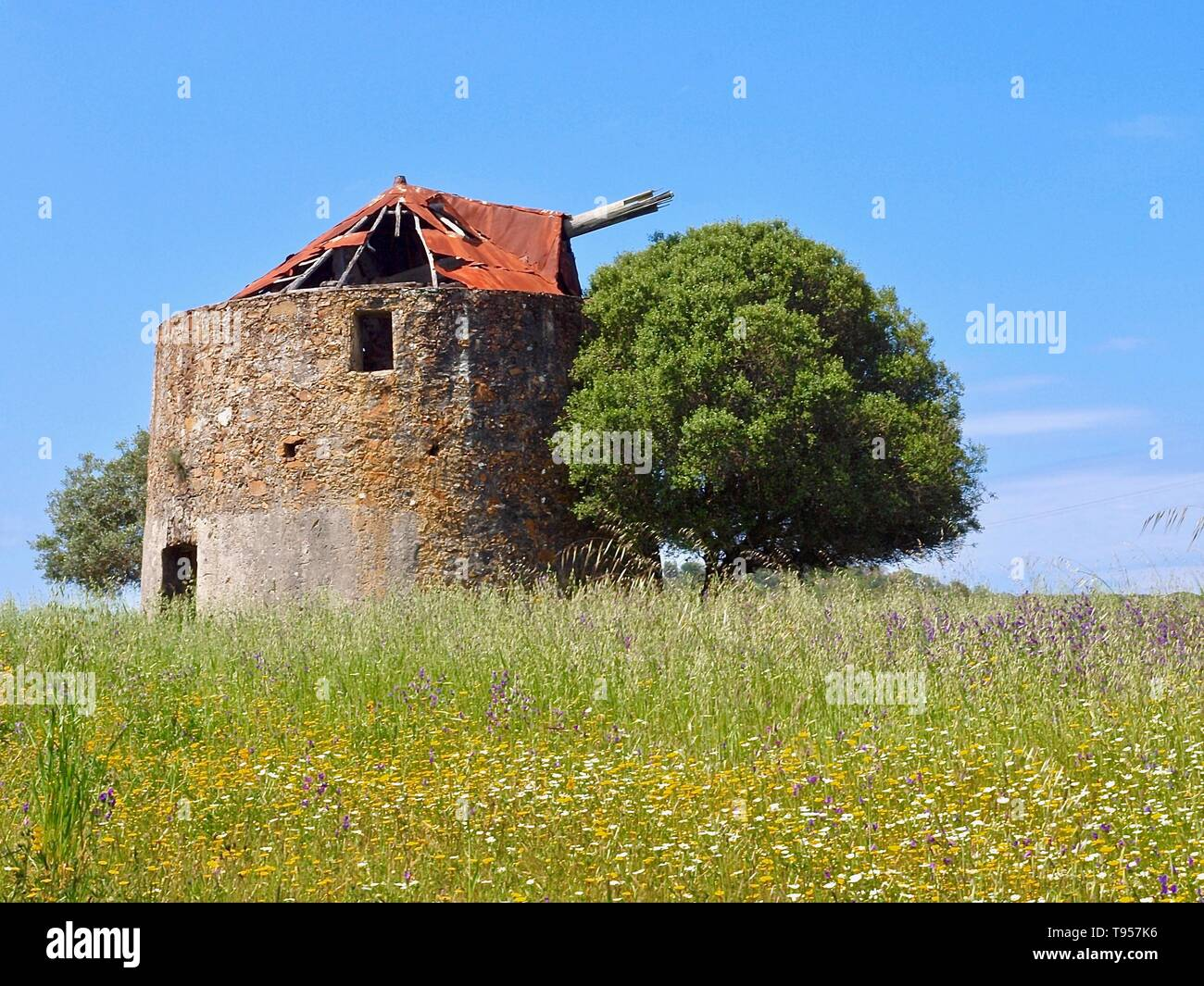 Old windmill with a tree on a meadow in Odeiceixe in Portugal - Stock Image