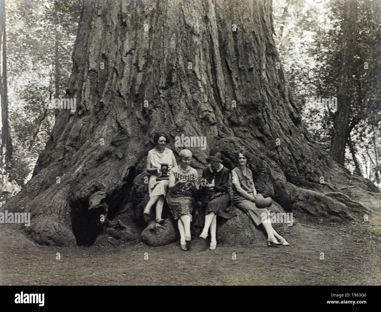 Sequoia Women