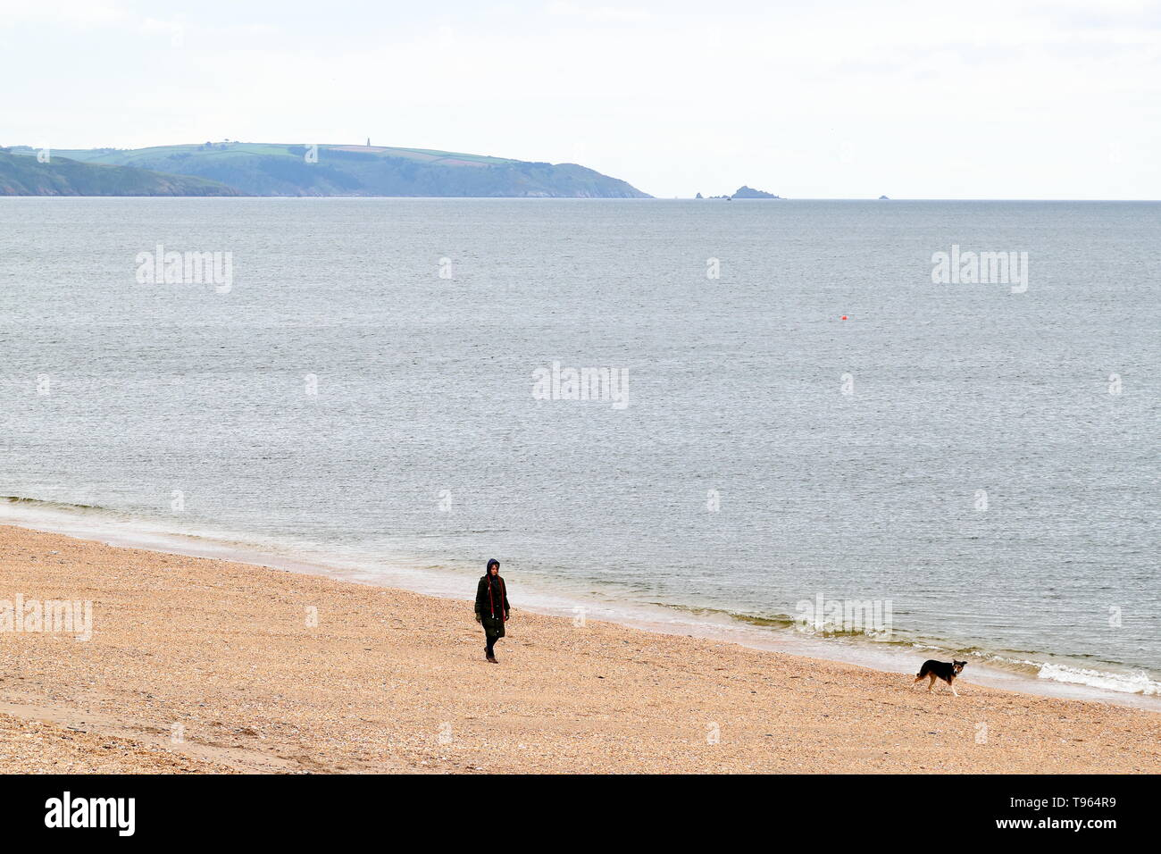A dogwalker on the beach of Slapton Sands near Torcross, Deveon, UK - Stock Image