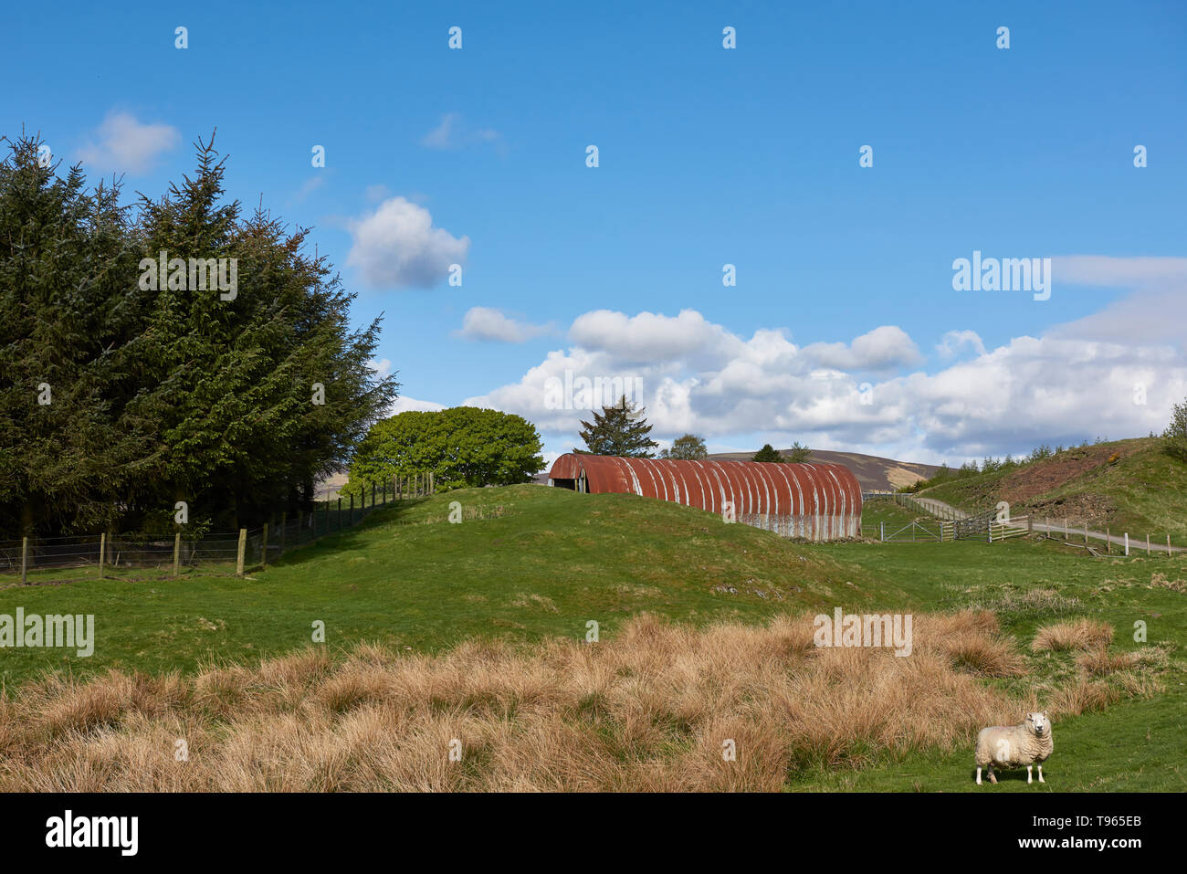 A rusty galvanised tin Farm building high up in the Angus Glens of Scotland, on a fine Morning in May. Glen Prosen, Scotland. - Stock Image