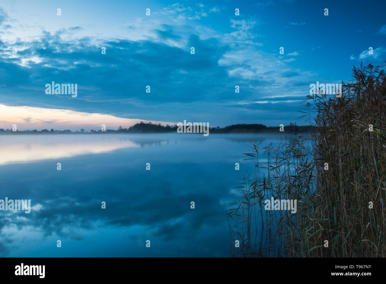 Reeds on the lake shore, evening fog and clouds reflecting in the water. Stock Photo