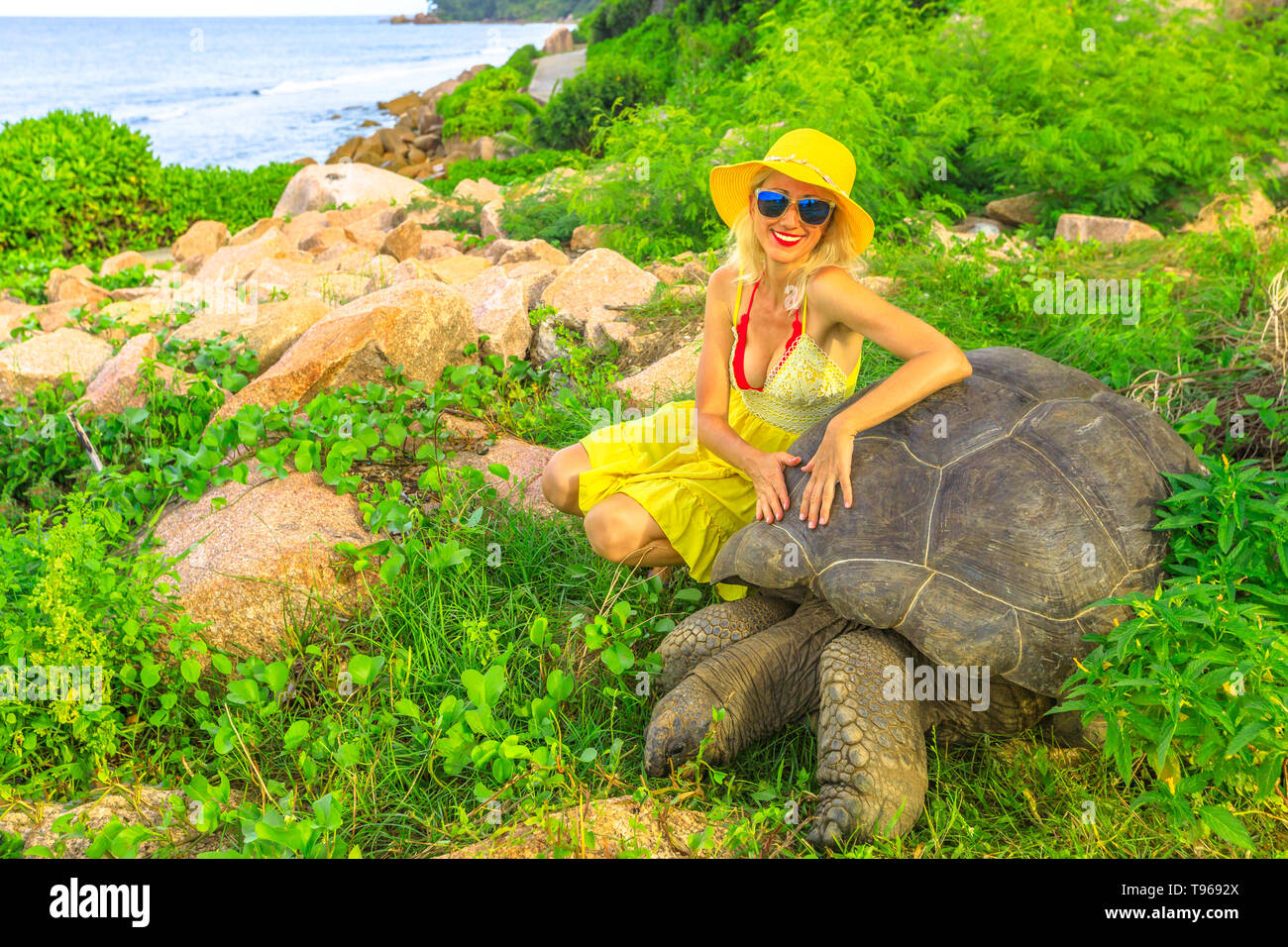 Elegant lifestyle tourist woman with sunhat touches and interacts with Aldabra Giant Tortoise, Aldabrachelys gigantea, in nature with sea background - Stock Image