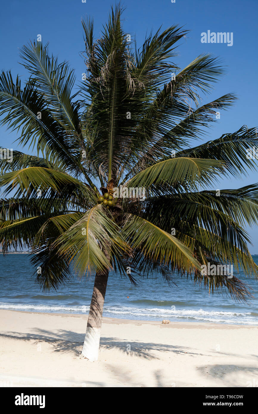 Beach with palms at TTC Resort, South China Sea, Ninh Thuan,Vietnam, Asia - Stock Image