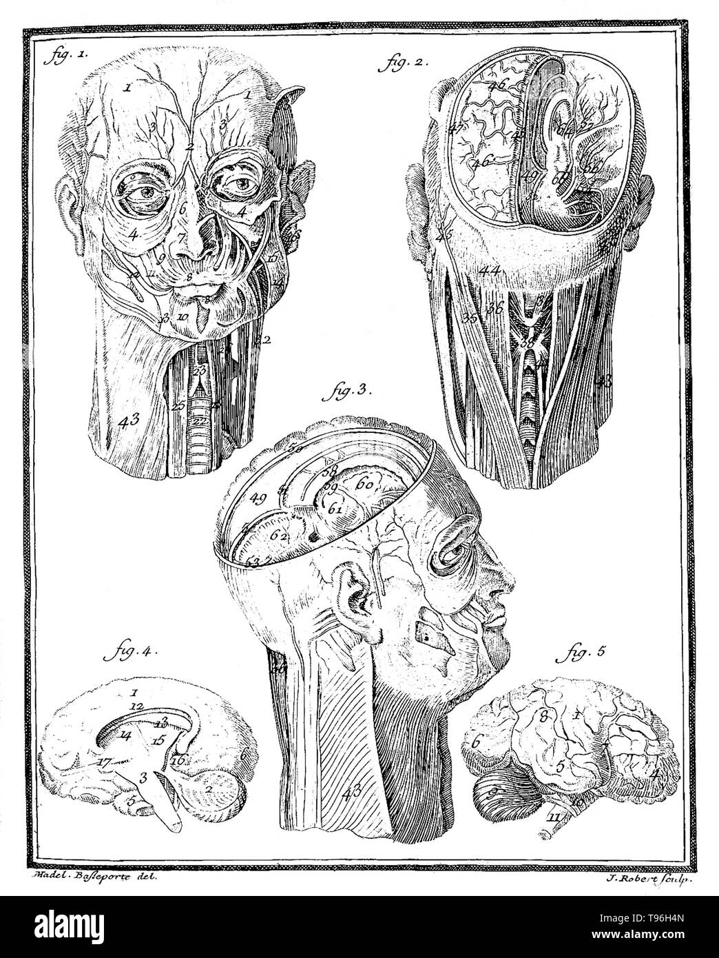 Comte de Buffon: Histoire Naturelle, V.III. Anatomical drawing of human head showing different compartments of the brain.The Histoire Naturelle, générale et particulière, avec la description du Cabinet du Roi (Natural History, General and Particular, with a Description of the King's Cabinet) is an encyclopedic collection of 36 large (quarto) volumes written between 1749-1804 by the Comte de Buffon, and continued in eight more volumes after his death by his colleagues. - Stock Image
