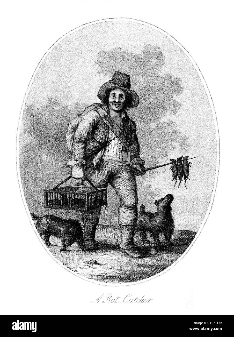 A rat-catcher (accompanied by two dogs) carrying a cage of live rats in his right hand and a sharpened wooden stick with dead rats dangling from it in his left. A rat-catcher is a person who practices rat-catching as a professional form of pest control. Keeping the rat population under control was practiced in Europe to prevent the spread of diseases, most notoriously the Black Plague, and to prevent damage to food supplies. In modern developed countries, such a professional is otherwise known as a pest control operative or pest technician. Rat-catchers may attempt to capture rats themselves,  - Stock Image