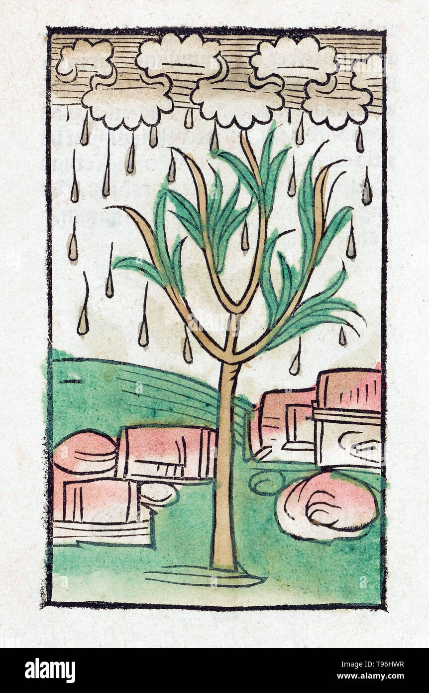 Tree and rain. The Hortus Sanitatis (Garden of Health), the first natural history encyclopedia, was published by Jacob Meydenbach in Germany, 1491.  He describes plants and animals (both real and mythical) together with minerals and various trades, with their medicinal value and method of preparation. The hand-colored woodcut illustrations are stylized but often easily recognizable. 1547 edition. - Stock Image