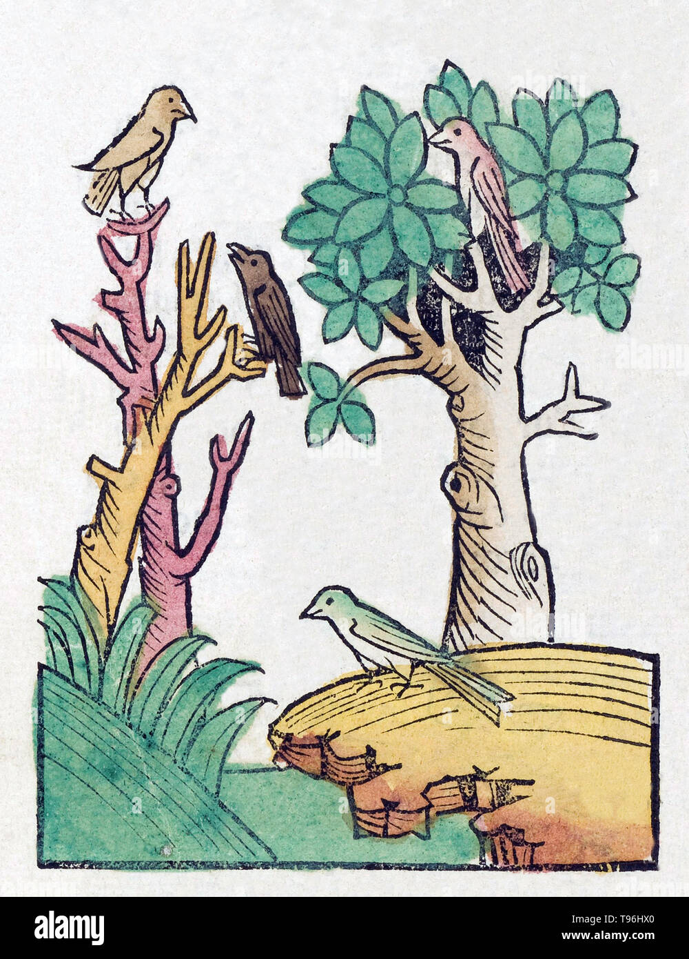Unidentified birds in trees. The Hortus Sanitatis (Garden of Health), the first natural history encyclopedia, was published by Jacob Meydenbach in Germany, 1491.  He describes plants and animals (both real and mythical) together with minerals and various trades, with their medicinal value and method of preparation. The hand-colored woodcut illustrations are stylized but often easily recognizable. 1547 edition. - Stock Image