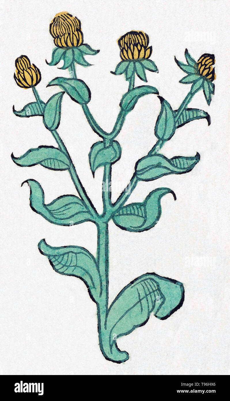 Unidentified plant. The Hortus Sanitatis (Garden of Health), the first natural history encyclopedia, was published by Jacob Meydenbach in Germany, 1491.  He describes plants and animals (both real and mythical) together with minerals and various trades, with their medicinal value and method of preparation. The hand-colored woodcut illustrations are stylized but often easily recognizable. 1547 edition. - Stock Image