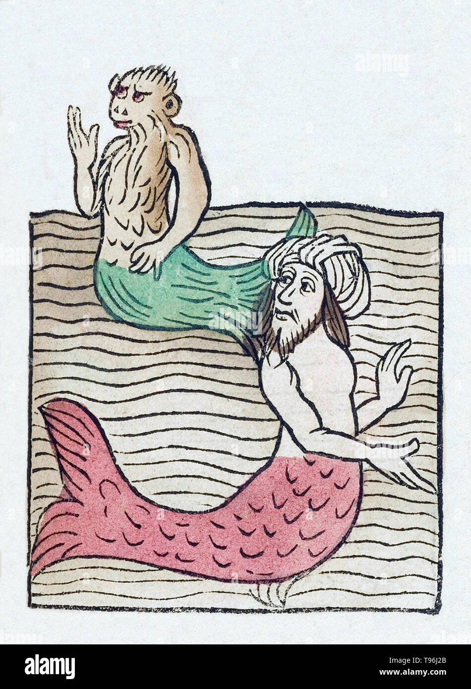 Mermen have the form of a male human from the waist up and are fish-like from the waist down, having scaly fish tails in place of legs. The Hortus Sanitatis (Garden of Health), the first natural history encyclopedia, was published by Jacob Meydenbach in Germany, 1491.  He describes plants and animals (both real and mythical) together with minerals and various trades, with their medicinal value and method of preparation. The hand-colored woodcut illustrations are stylized but often easily recognizable. 1547 edition. - Stock Image