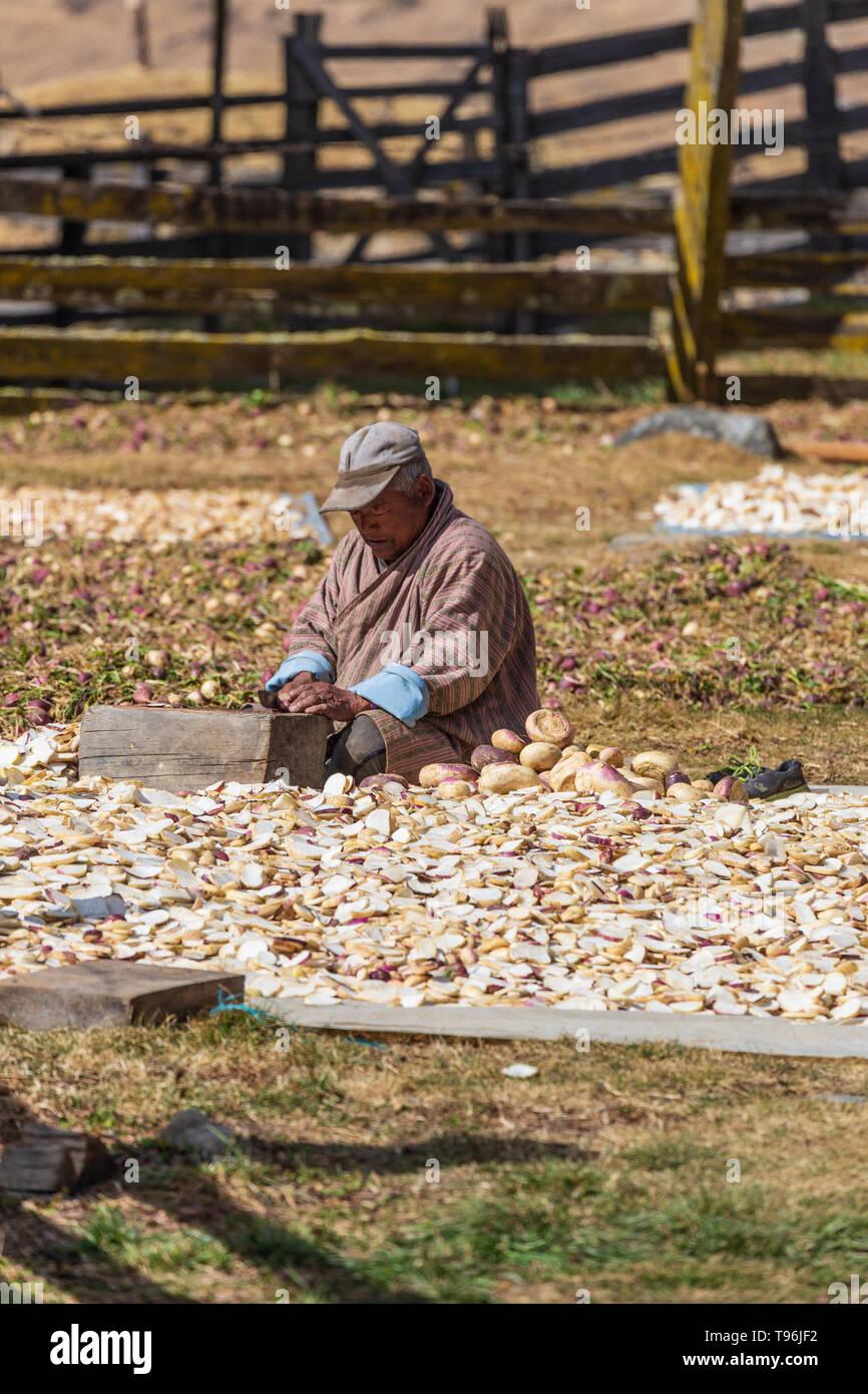 Turnip farmer preparing some turnips for the livestock, Bumthang Valley, Bhutan - Stock Image