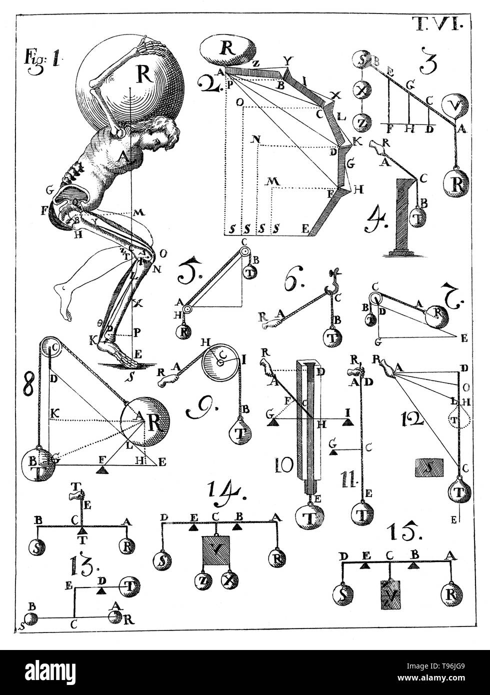 De motu animalium, 1734 edition. Table VI. Giovanni Alfonso Borelli (January 28, 1608 - December 31, 1679) was a Renaissance Italian physiologist, physicist, and mathematician. He contributed to the modern principle of scientific investigation by continuing Galileo's custom of testing hypotheses against observation. Trained in mathematics, Borelli also made extensive studies of Jupiter's moons, the mechanics of animal locomotion and, in microscopy, of the constituents of blood. - Stock Image