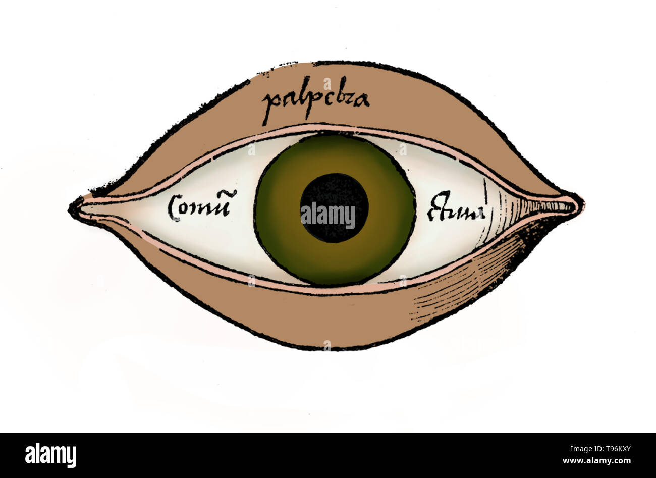 Diagram of the eye from Margarita philosophica by Gregor Reisch (1467-1525) was a German Carthusian humanist writer. His chief work is the Margarita philosophica, which first appeared at Freiburg in 1503. It is an encyclopedia of knowledge intended as a textbook for students, and contains in twelve books Latin grammar, dialectics, rhetoric, arithmetic, music, geometry, astronomy, physics, natural history, physiology, psychology, and ethics. The usefulness of the work was increased by numerous woodcuts and a full index. - Stock Image