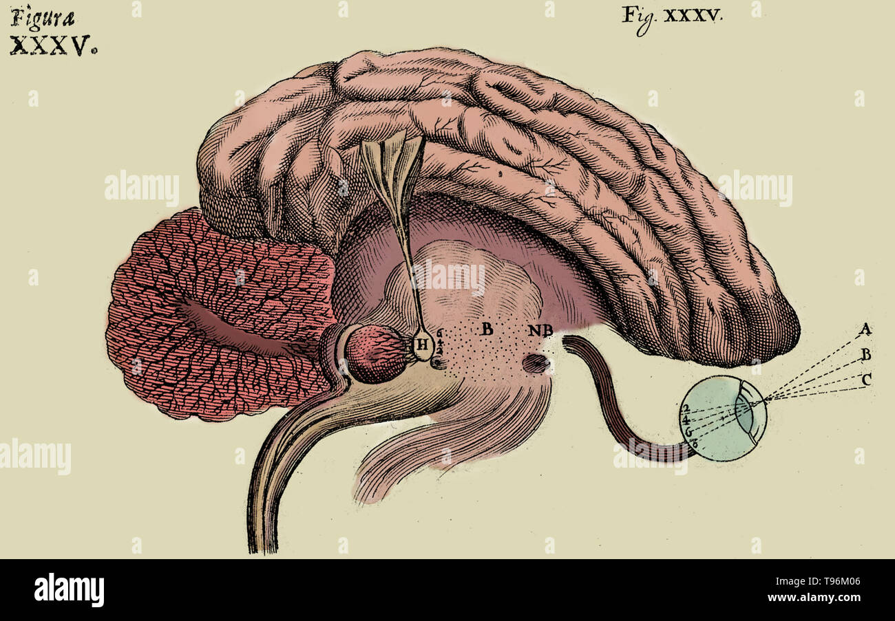 Historical diagram of the brain, showing the process of sight, by Rene Descartes. The Nervous System, 1662. Stock Photo