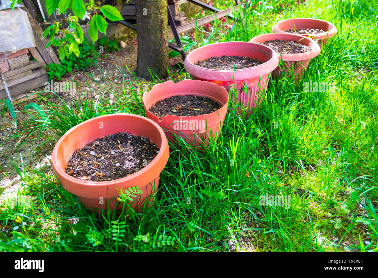 Alamy & Five big flower pots with garden potting soil under a tree laid ...