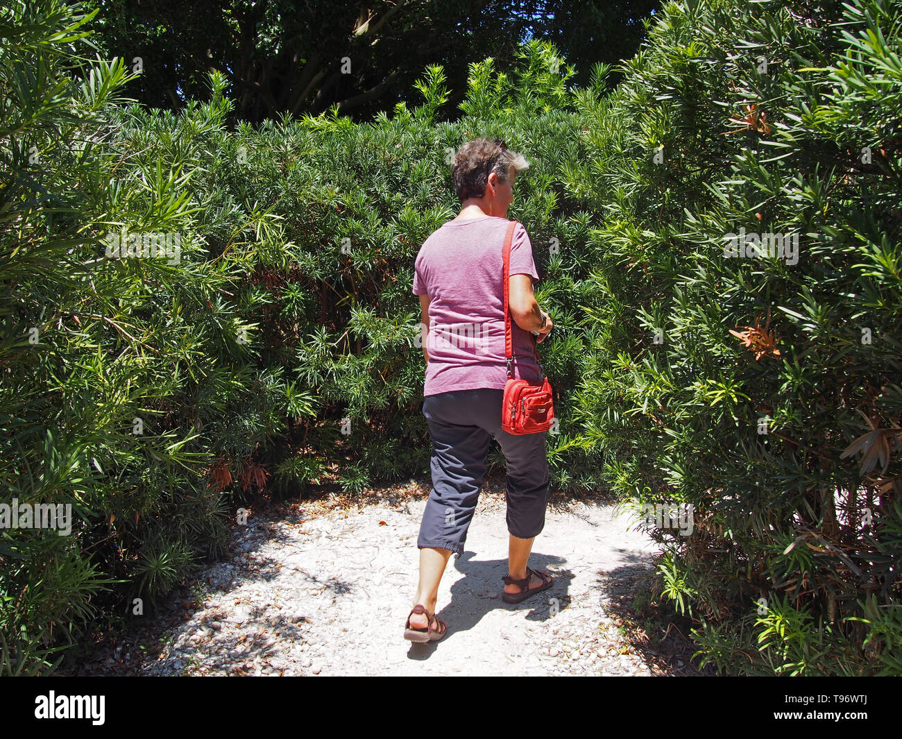 Woman tourist walking through labyrinth in the Avant-garden at the Dali Museum in St. Petersburg, Florida, USA, May 8, 2019, © Katharine Andriotis - Stock Image