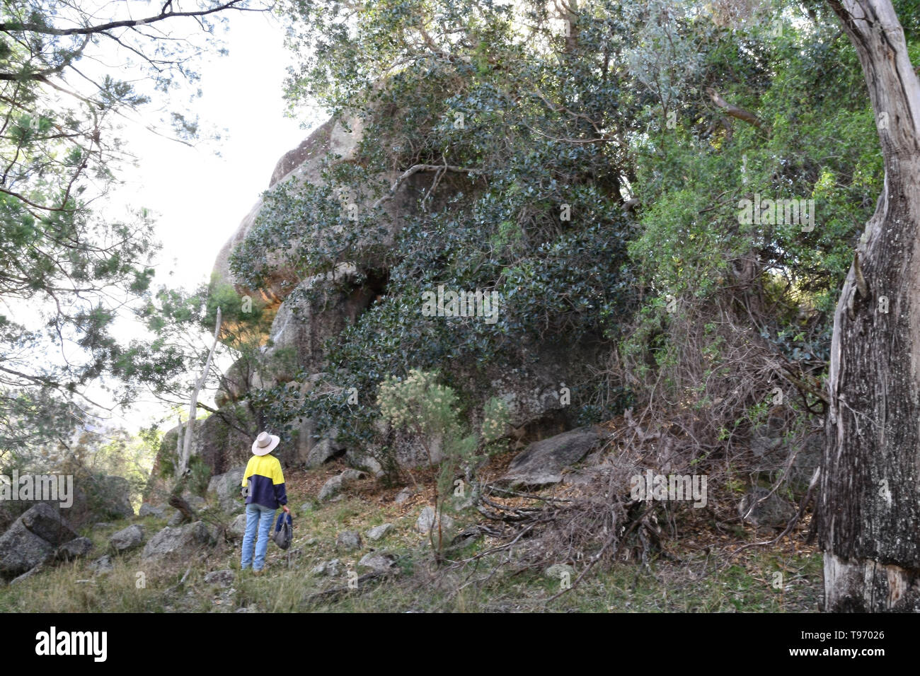 A Hiker looking at a large boulder in a temperate forest near Tamworth Australia. - Stock Image
