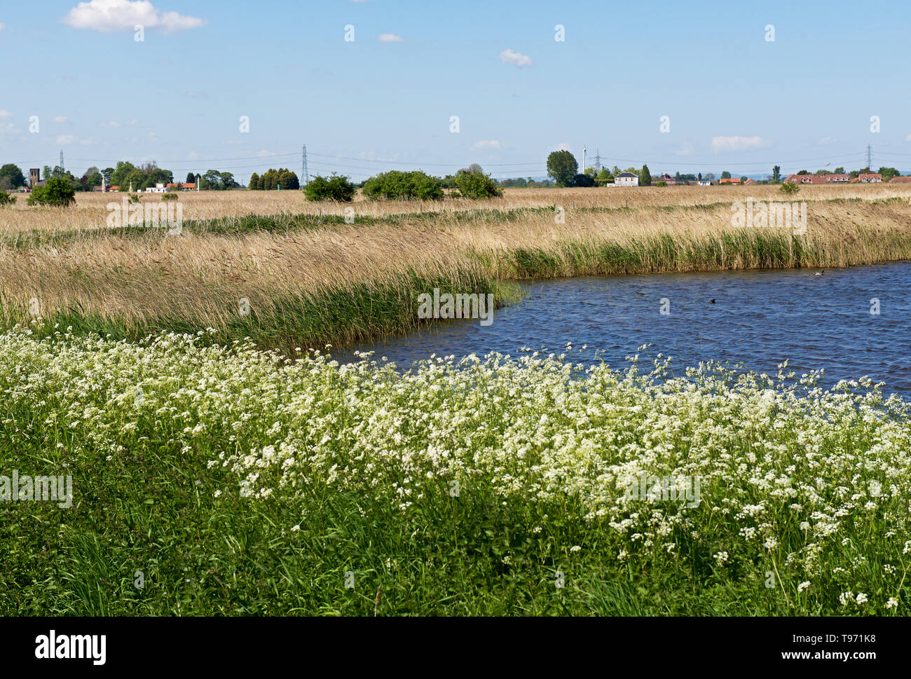 Blacktoft Sands, RSPB Nature Reserve, East Yorkshire, England UK - Stock Image