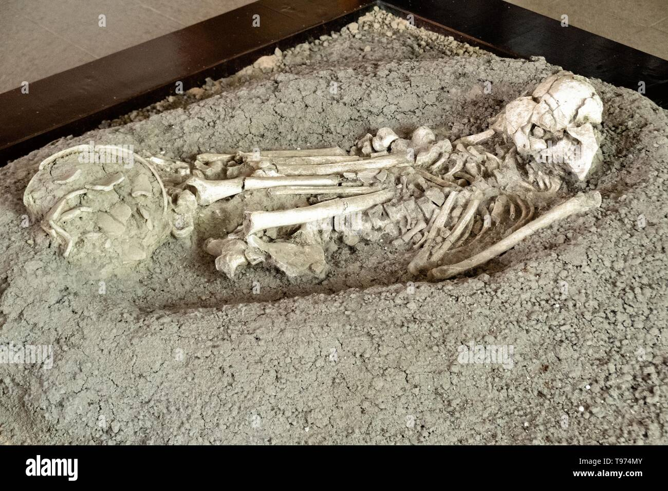 A Mesoamerica skeletal remains from a burial chamber on display in the museum at the pre-Columbian archeological complex of El Tajin in Tajin, Veracruz, Mexico. El Tajín flourished from 600 to 1200 CE and during this time numerous temples, palaces, ballcourts, and pyramids were built by the Totonac people and is one of the largest and most important cities of the Classic era of Mesoamerica. - Stock Image