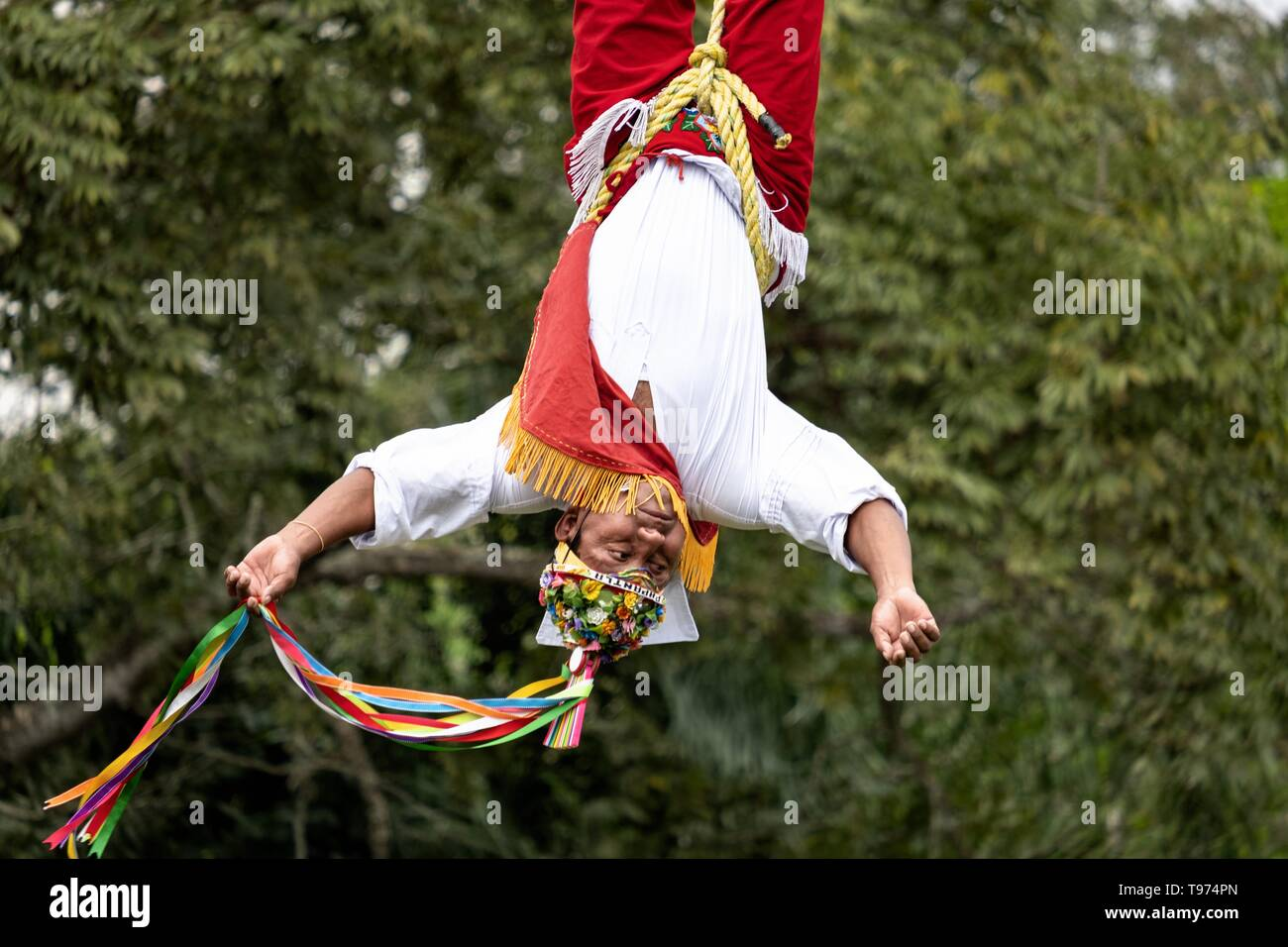 A Volador performs the sacred ceremonial Dance of the Voladores in the Parque Takilhsukut at the pre-Columbian archeological complex of El Tajin in Tajin, Veracruz, Mexico. The Danza de los Voladores is a indigenous Totonac ceremony involving five participants who climb a thirty-meter pole. Four of these tie ropes around their waists and wind the other end around the top of the pole in order to descend to the ground. The fifth participant stays at the top of the pole, playing a flute and a small drum. The ceremony has been inscribed as a Masterpiece of the Oral and Intangible Heritage of Human - Stock Image