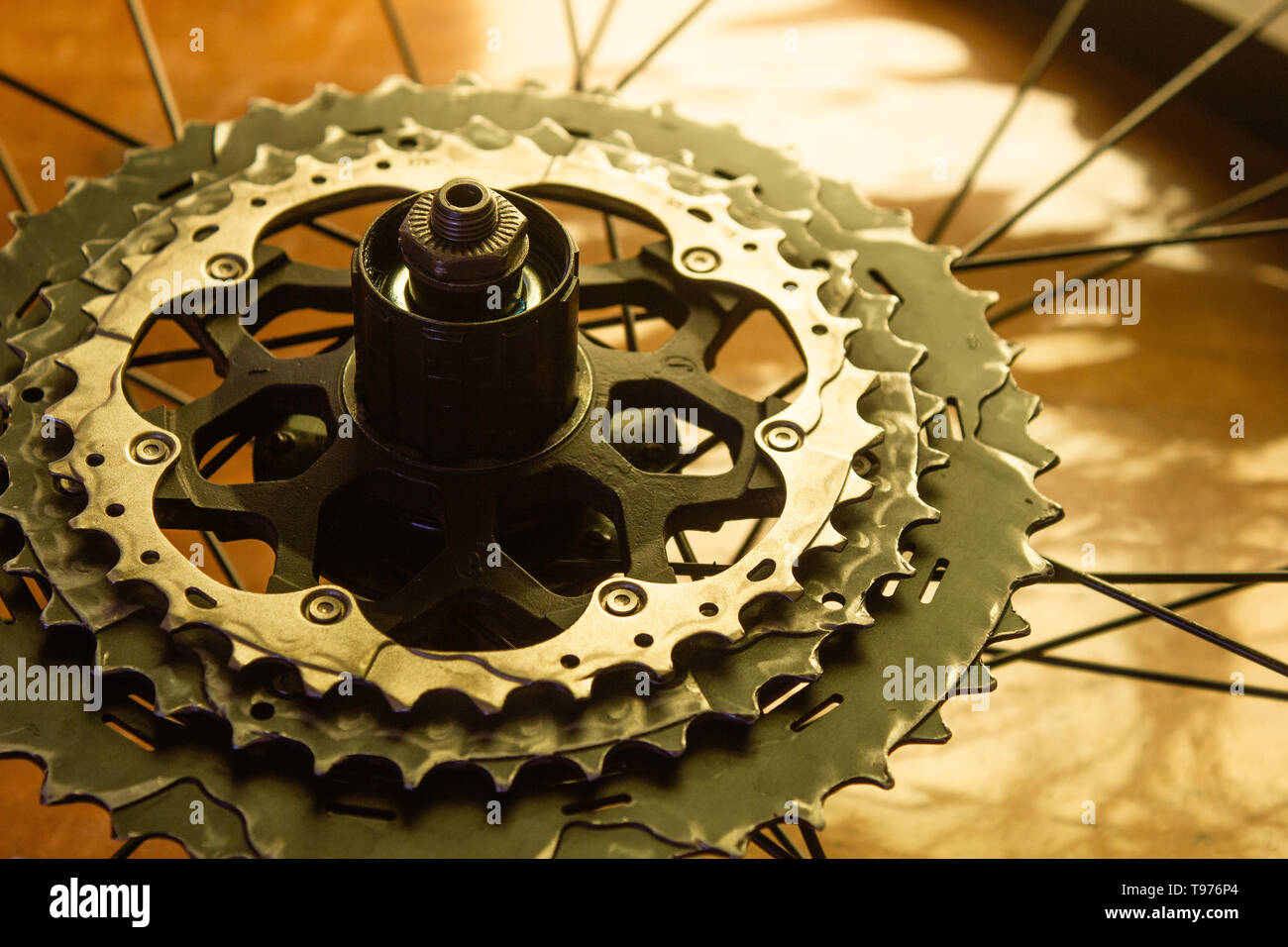 two largest sprockets of a cycling cassette mounted on the rear wheel - Stock Image