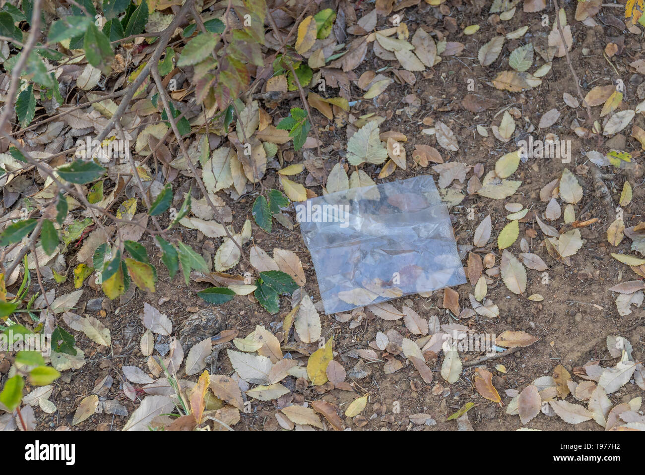 An isolated single-use plastic bag lies abandoned in nature image with copy space - Stock Image