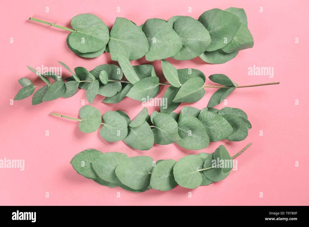 Green eucalyptus branches on color background - Stock Image