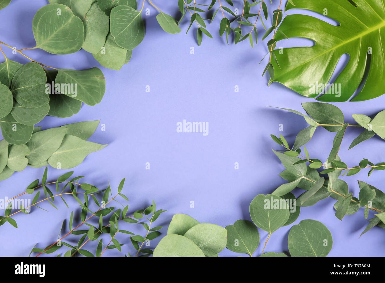Frame made of green tropical leaves on color background - Stock Image