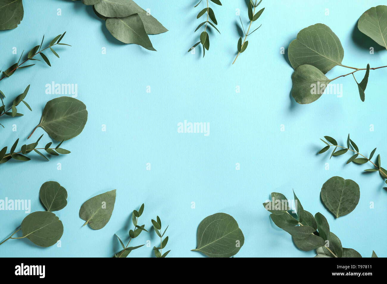 Frame made of green eucalyptus branches on color background - Stock Image