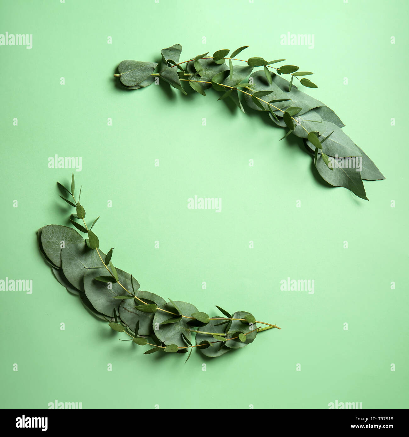 Green eucalyptus branches with leaves on color background - Stock Image