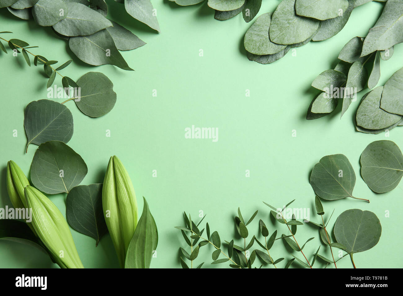 Frame made of green eucalyptus branches and leaves on color background - Stock Image