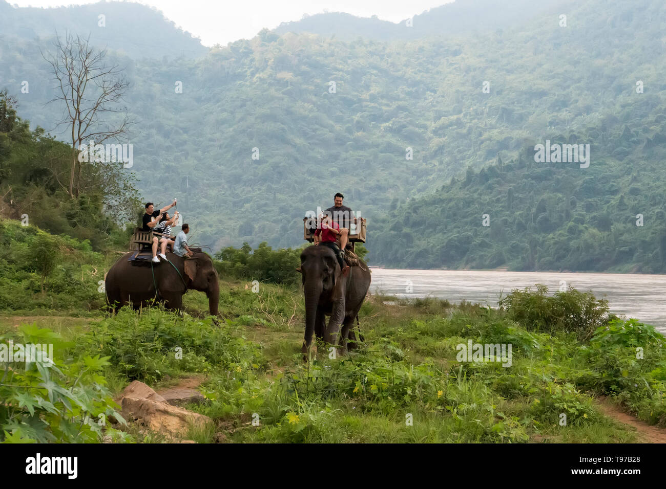 Tourist group rides through the jungle on the backs of elephants. Laos. Luang Prabang. - 15 January 2019 Stock Photo