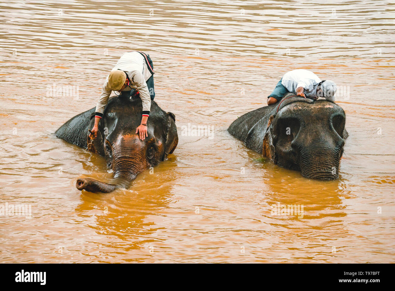Laos. Luang Prabang - 15 January 2019: Elephant drivers wash, bathe their animals in the Mekong river standing on an elephant. Stock Photo