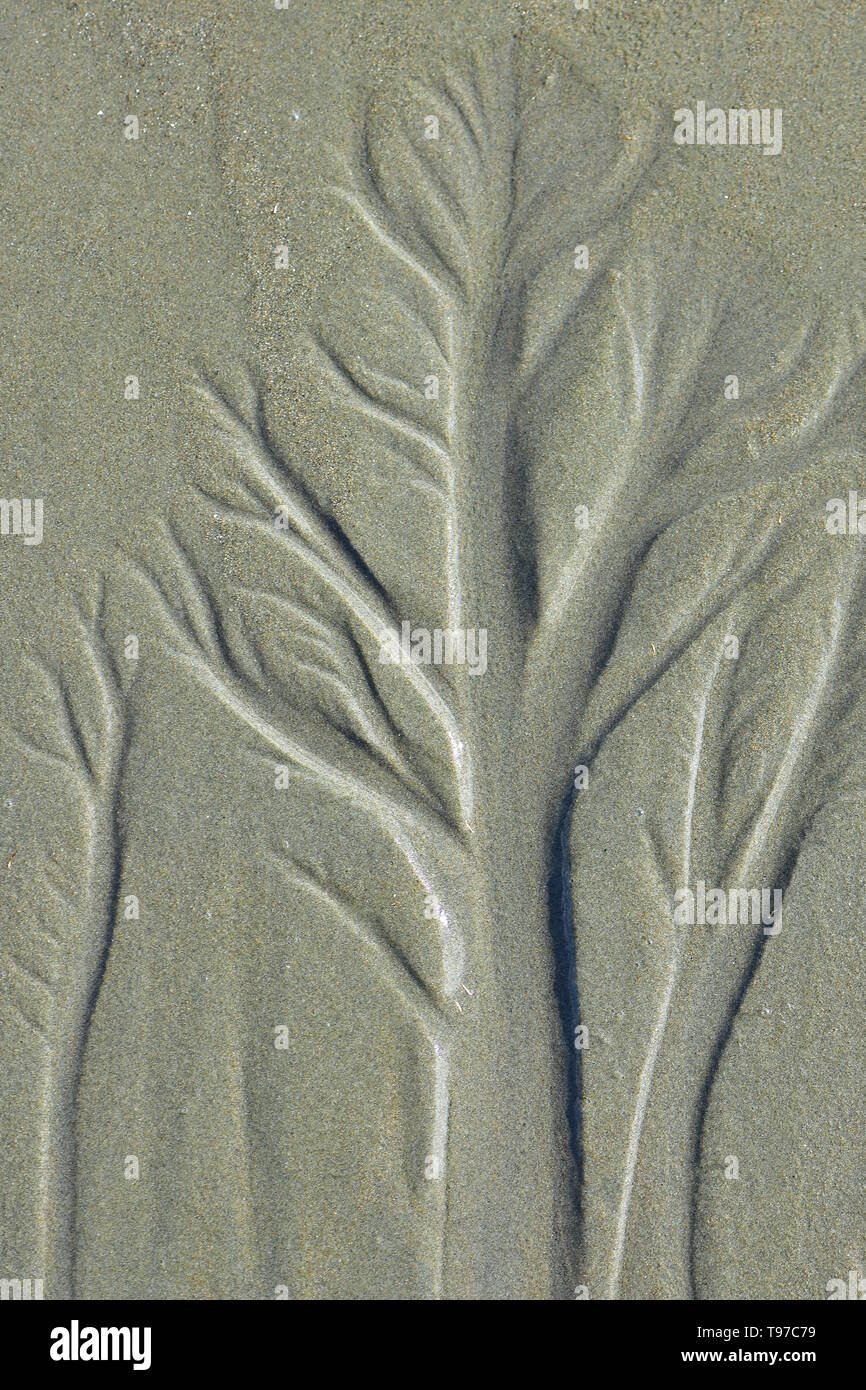 Detail of shapes of trees created by sea water outgoing from sandy beach at low tide. - Stock Image