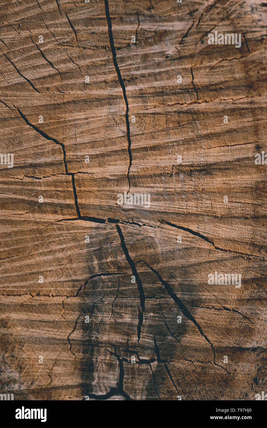 background texture of a felled tree cracked stripes and stains frame fill - Stock Image