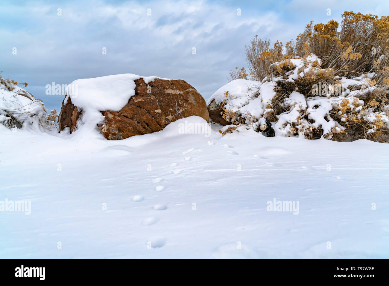 Animal tracks on snow covered ground viewed on a frosty winter day - Stock Image