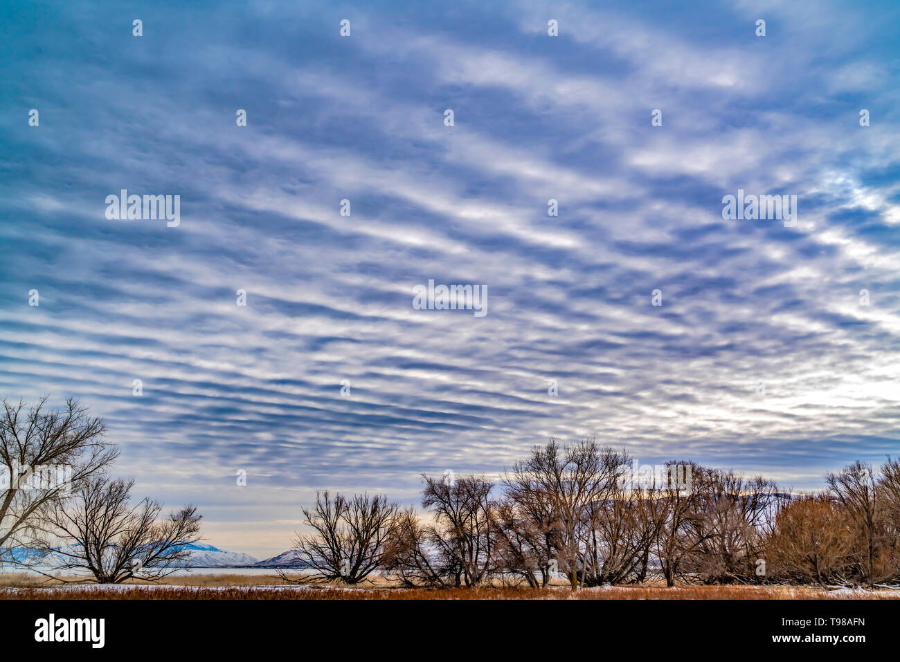 Defocused view of a dramatic blue sky filled with white puffy clouds - Stock Image