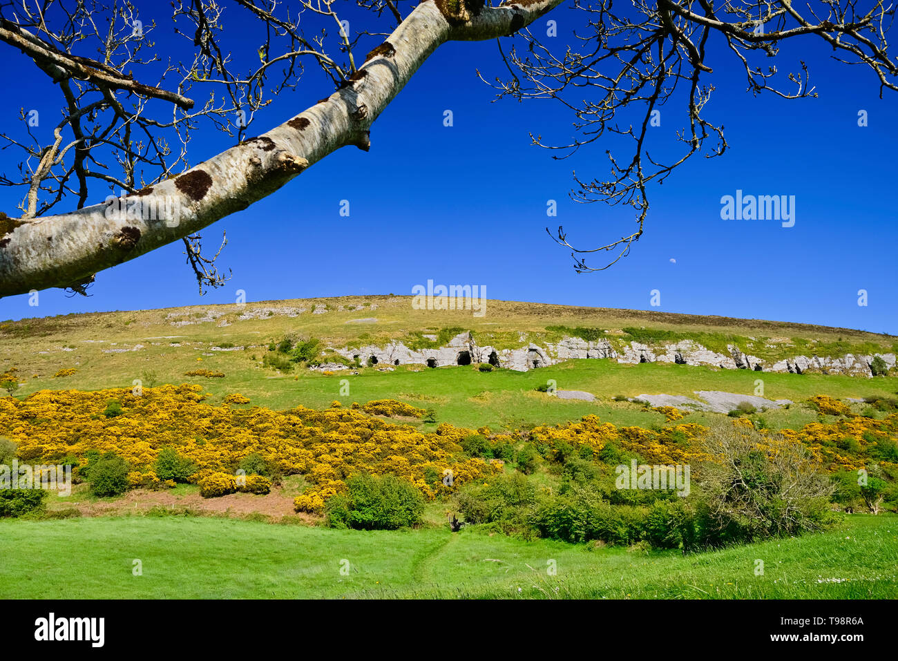 Ireland, County Sligo, Caves of Keash surrounded by fields of  whins or furze. - Stock Image