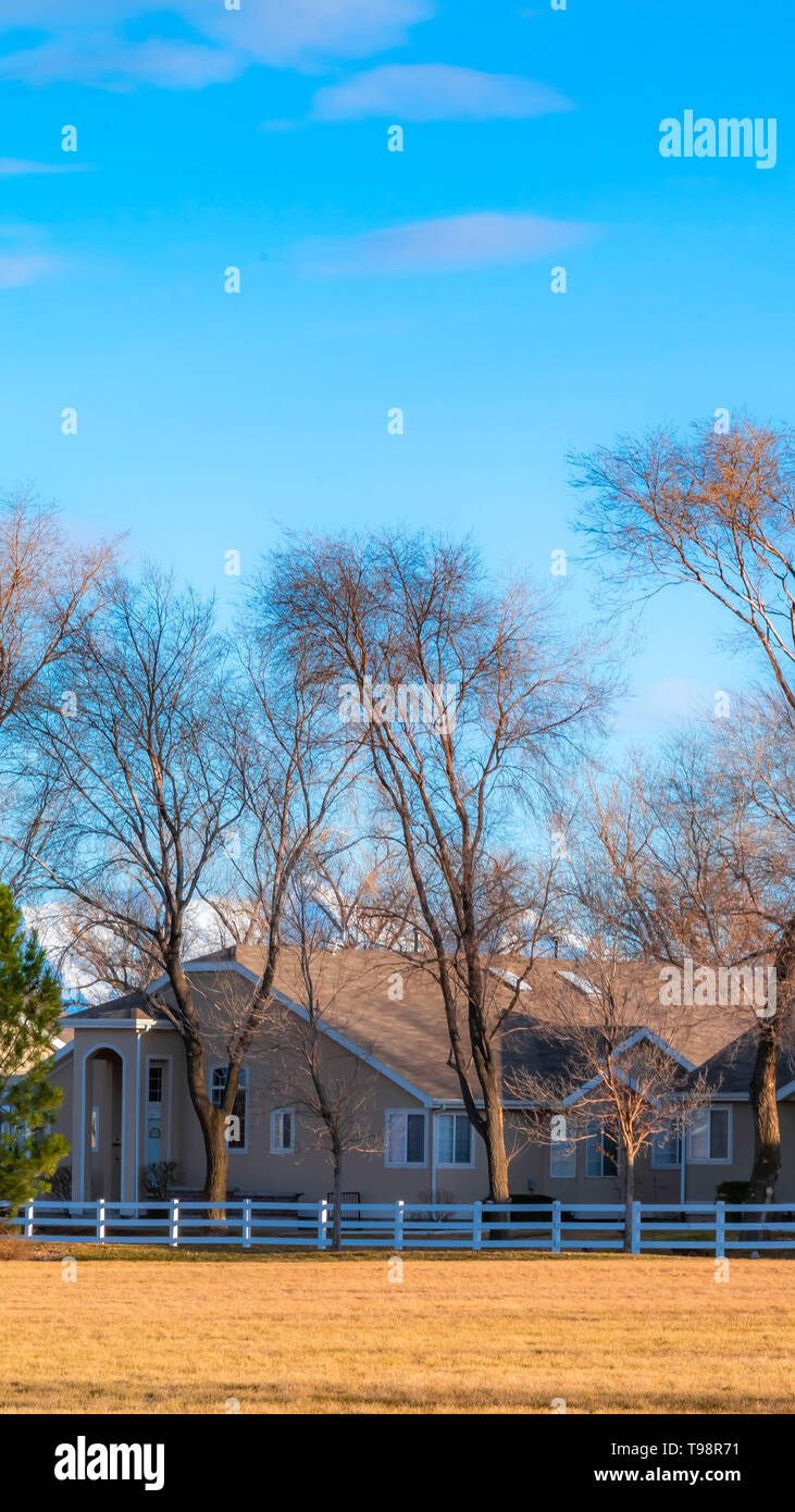Clear Vertical Charming houses and tall leafless trees under blue sky on a sunny day - Stock Image