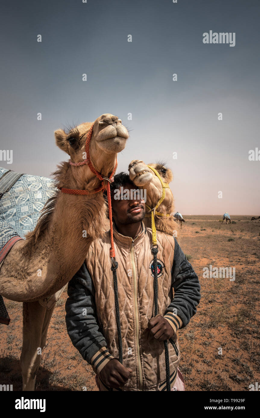 Strong relation between the camel keeper and his camels, Saudi Arabia - Stock Image