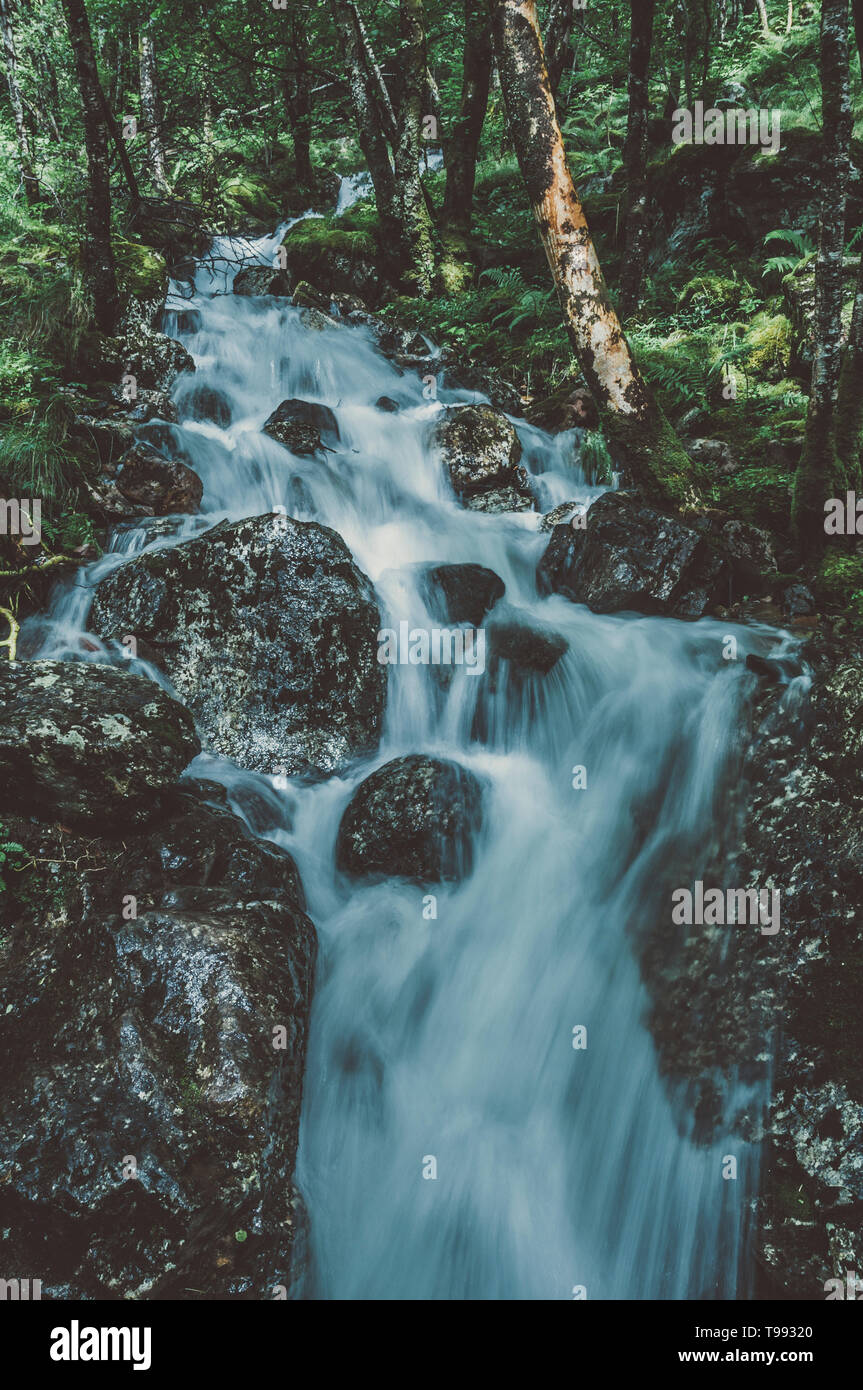 Bach im Wald auf dem Weg zu den Steall Falls, Glen Nevis, Highlands, Schottland|Creek in the forest on the way to Steall Falls, Glen Nevis, Highlands, - Stock Image