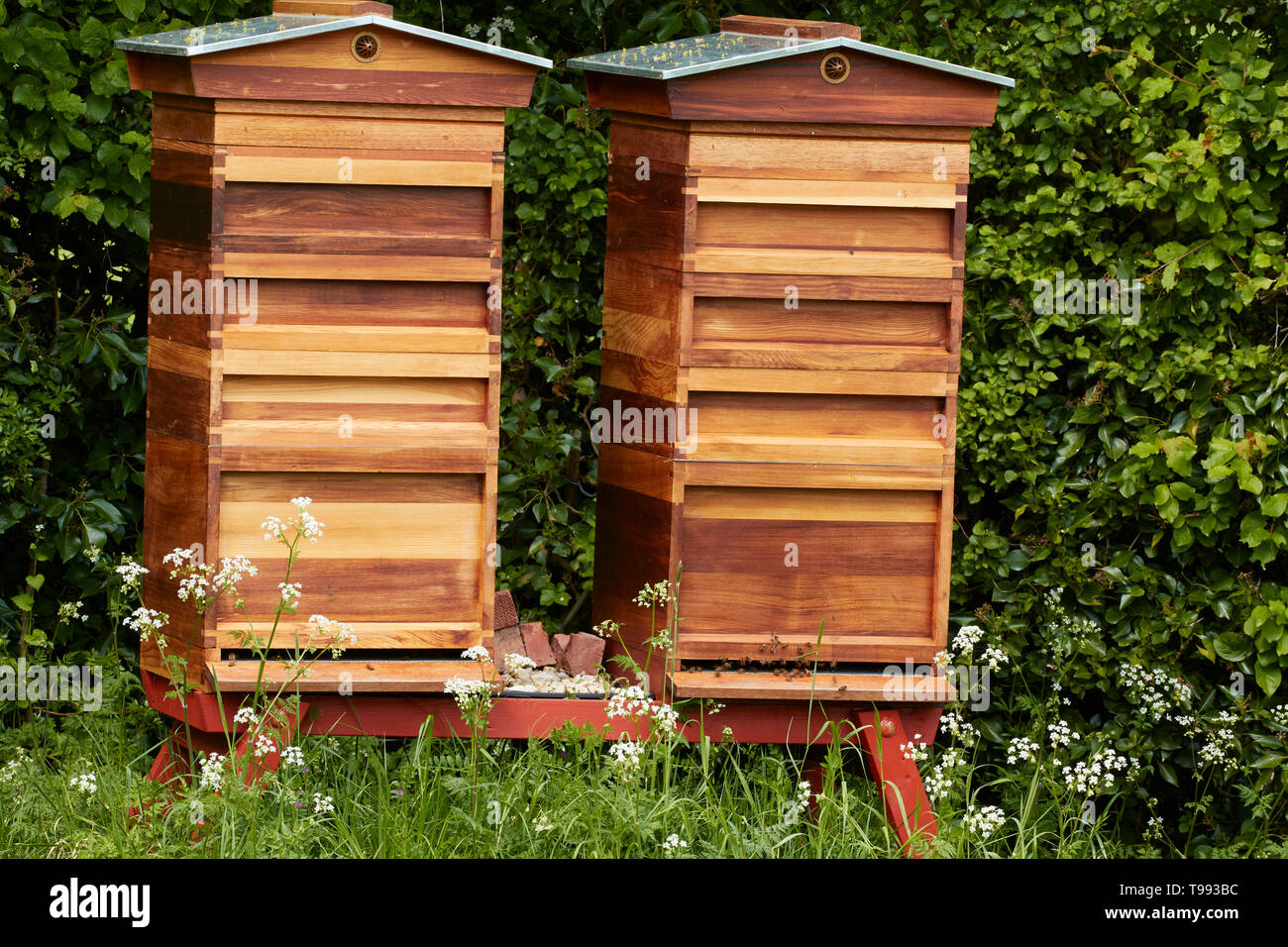 Beehives in the grounds of Anne Hathaway's Cottage, Shottery, Stratford-upon-Avon, England, United Kingdom, Europe - Stock Image
