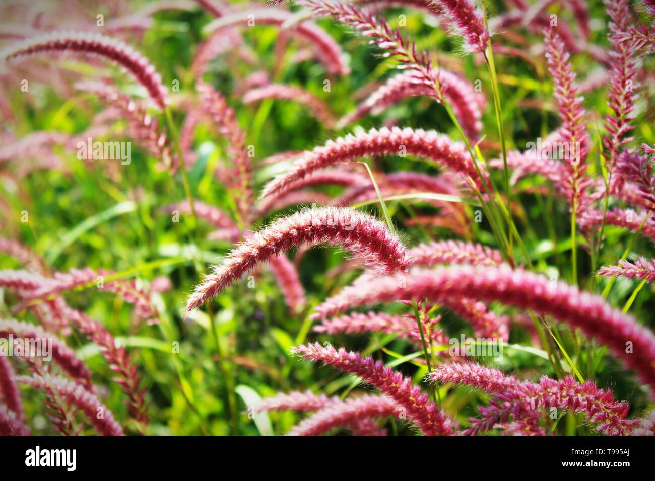 Beautiful Wild Grass Varieties Stock Photo 246678842 Alamy