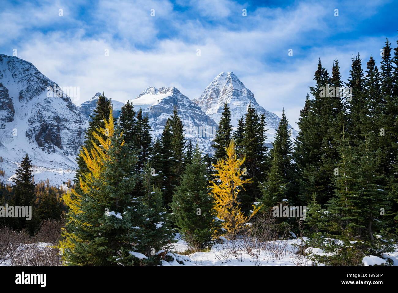 Mount Assiniboine Provincial Park, British Columbia, Canada Stock Photo