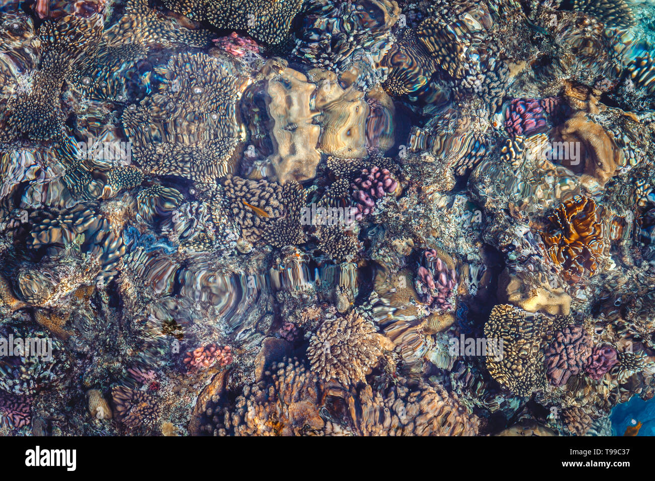 Bright coral reef with colorful fish of the Red Sea in Egypt. View from above - Stock Image