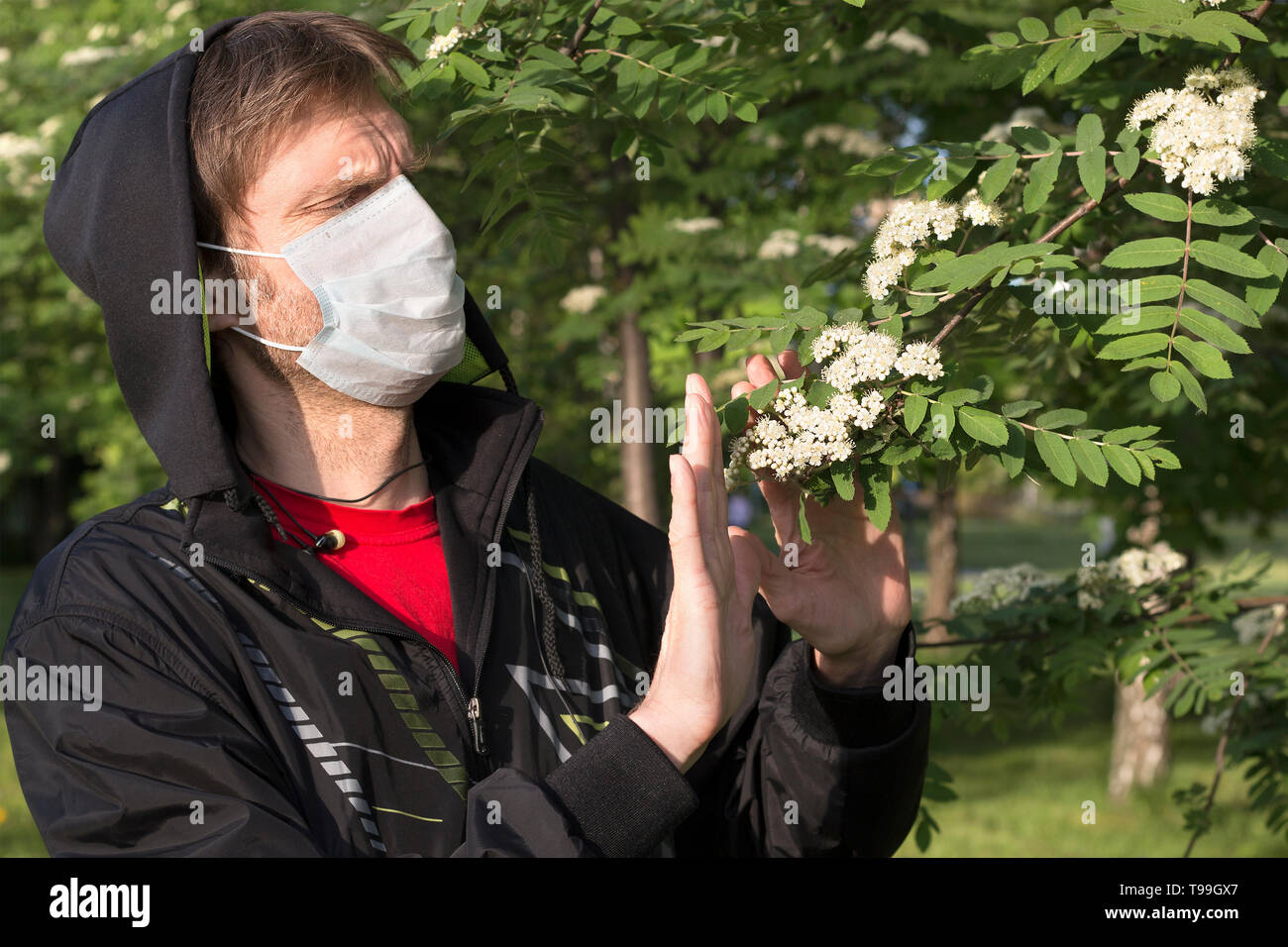 Man wearing a medical mask shows Stop gesture to a flowering branches. Seasonal allergic reaction to pollen. Stop to allergens - Stock Image