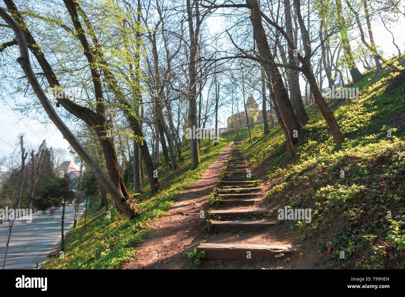 Wooden steps on the hill filled with blooming flowers, leading to the Butcher's tower in Sighisoara, tower built in the 15th century. - Stock Image