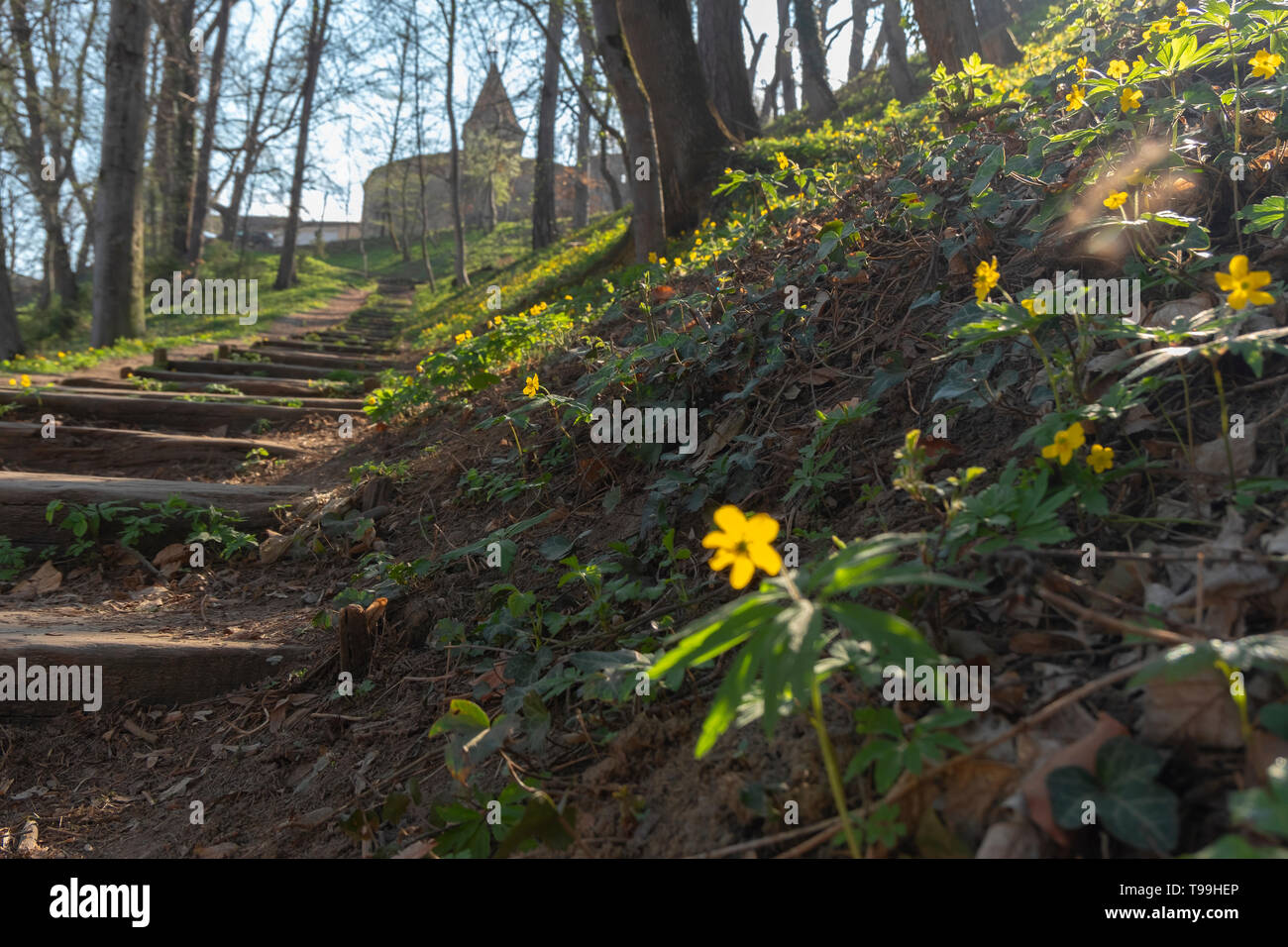Wooden steps on the hill, leading to the Butcher's tower in Sighisoara. The tower has three floors with five loopholes and the access was made, in the - Stock Image