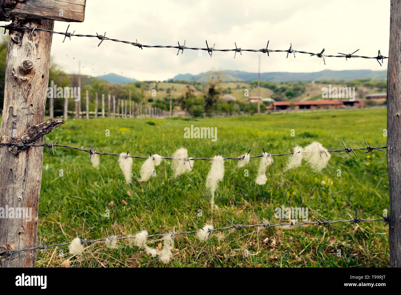 Animal farm in the country  Wooden fence with barbed wire with sheep wool on it Selective focus Stock Photo
