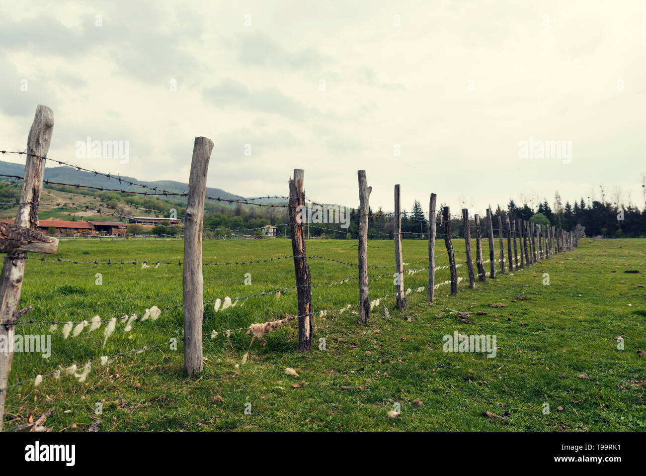 Wooden fence with barbed wire with sheep wool on it in an animal farm in the country Selective focus Stock Photo