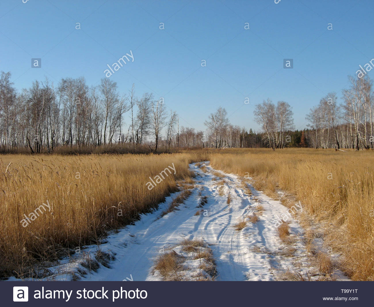 Snowy path from wheat field in Siberia, Russia. The snowy road in Siberian nature in January. Snowy path from the farm in sunny weather in winter. Blu - Stock Image